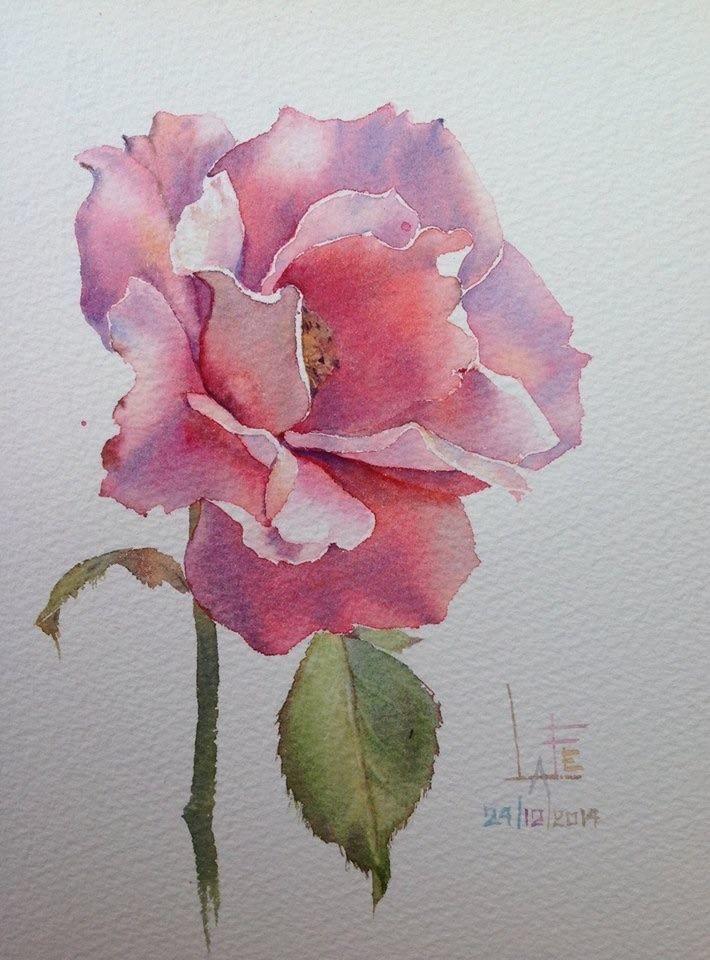 Drawn rose bush color shading Flowers Pinterest ideas Watercolor 710×960