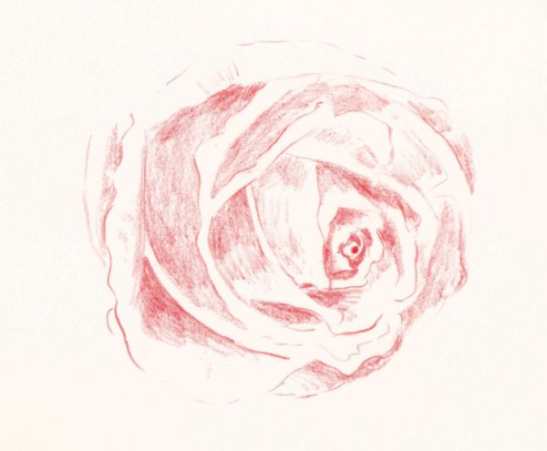 Drawn rose bush color shading Colored Rose Draw Light a