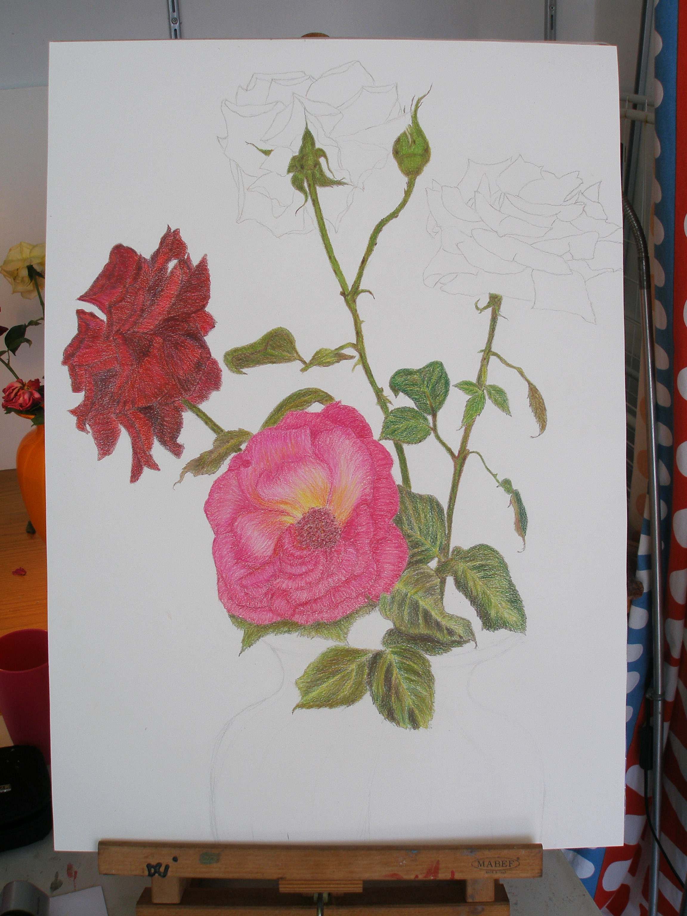 Drawn rose bush color shading Mareoca yellow of different used
