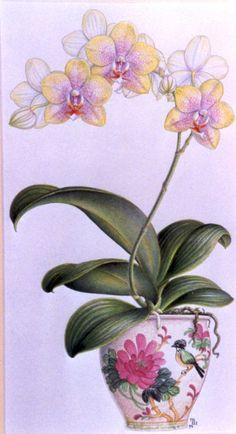 Drawn rose bush cooktown orchid Drawing FlowersFlower draw (300x552 FlowersArt
