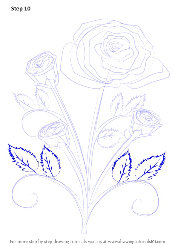 Drawn rose bush detail drawing Rose Drawing Tutorials : Step