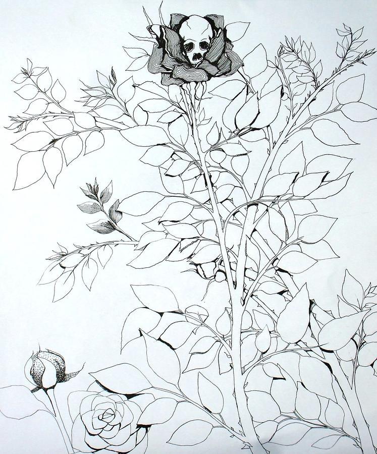 Drawn rose bush drawn Rose Bush Rose Drawing Drawing