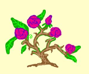 Drawn rose bush drawn Rose bush bush by (drawing