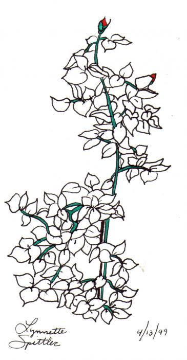 Drawn rose bush drawn Imag Drawing Rose bush Bush