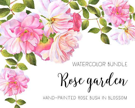 Drawn rose bush flower bundle Clip art clipart 106 bundle