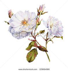 Drawn rose bush flower bundle Bush Roses drawing art botanical
