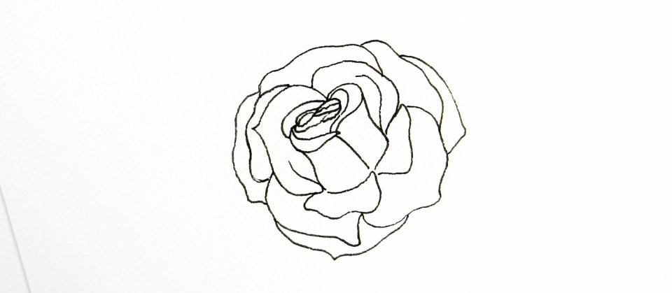 Drawn rose bush gel pen To The to The Knock