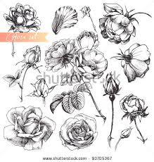 Drawn rose bush half sleeve Bush Search Google bush simple