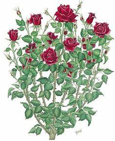 Drawn rose bush half sleeve Drawing  Pin Rose Inspiration