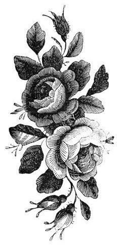 Drawn rose bush old fashioned flower > Vintage Tattoo Gallery of