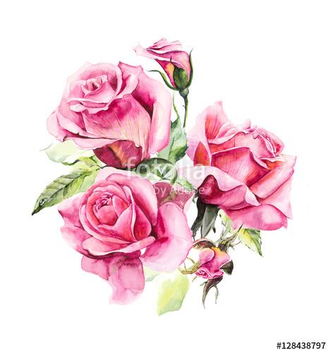 Drawn rose bush pattern Rose pink Wedding painting Watercolor