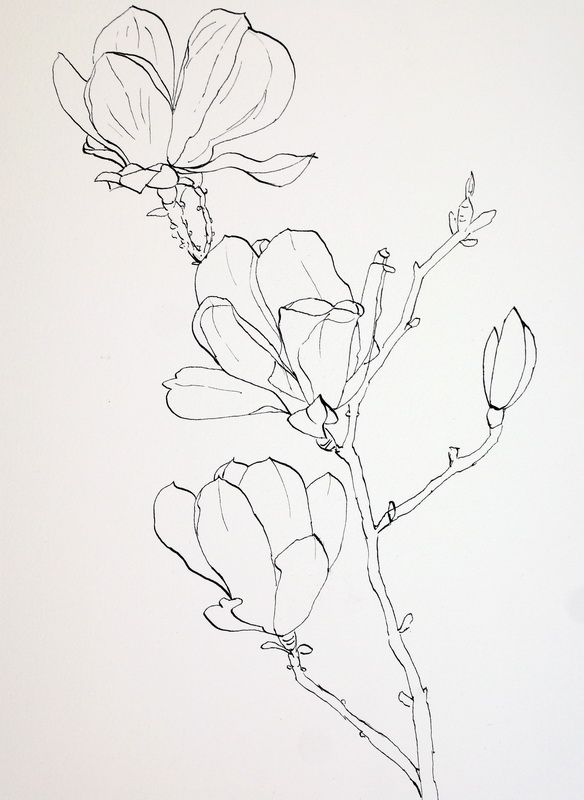 Drawn rose bush pen and ink Laying flowers drawings drawing ideas