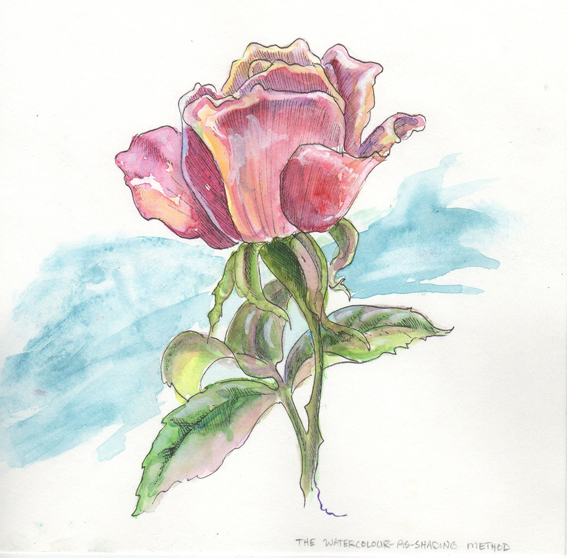 Drawn rose bush pen and ink And Combining  & used