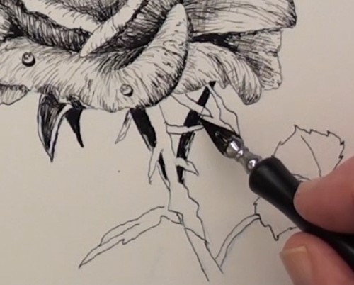 Drawn rose bush pen and ink Lessons in Draw the Art
