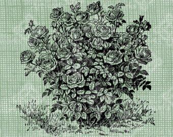 Drawn rose bush realistic Rose drawing drawing drawing Pinterest
