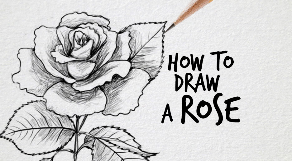 Drawn rose bush realistic To Factory a How Drawing