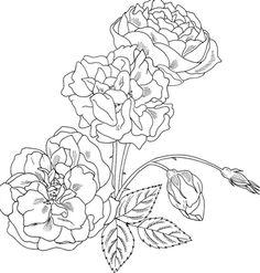 Drawn rose bush rosal Brunner Bush Coloring Rose Coloring