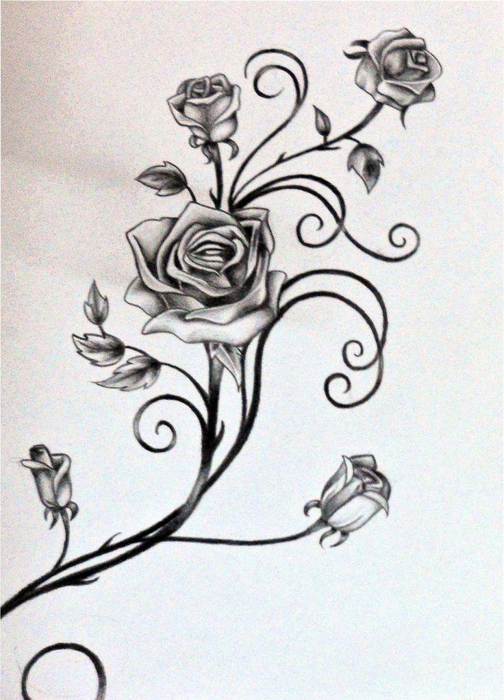 Drawn rose bush rose vine Roses Vines  Vines Vine
