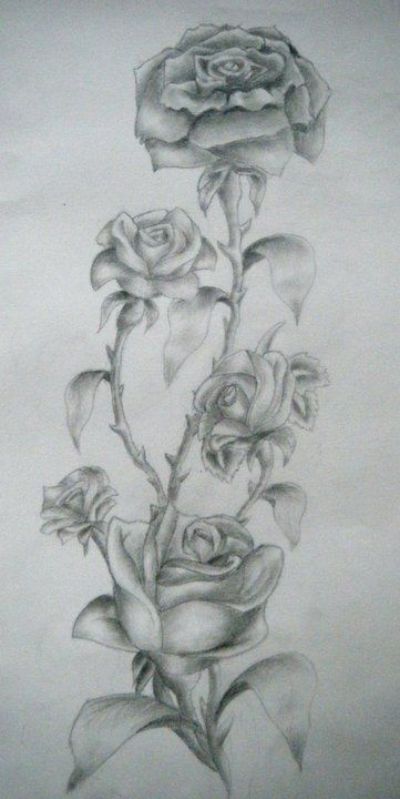 Drawn rose bush pattern By tattoos on  DeviantART