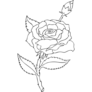 Drawn rose bush rosebud Easy rose easy Цветы