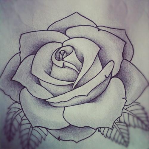 Drawn rose bush shaded A