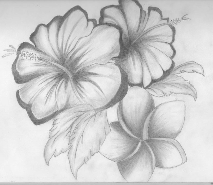 Drawn rose bush shaded Of shaded ~something by Flower
