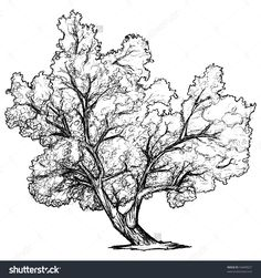 Drawn rose bush speedtree YouTube Trees and Rocks Pin