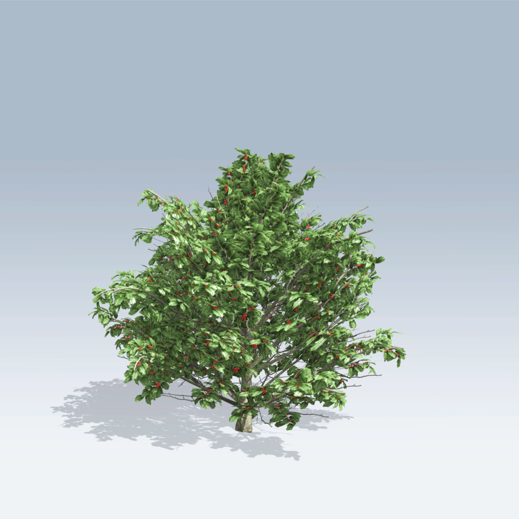 Drawn rose bush speedtree SpeedTree American (v6) 512 –