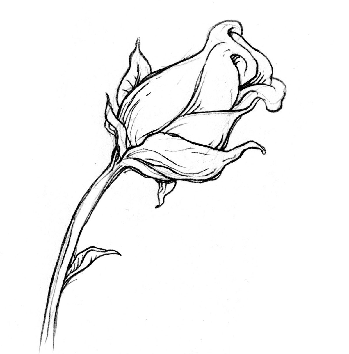 Drawn rose bush antique flower On Look you a looking