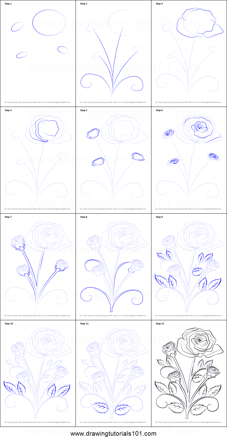 Drawn rose bush step by step flower How Rose Rose Photo To