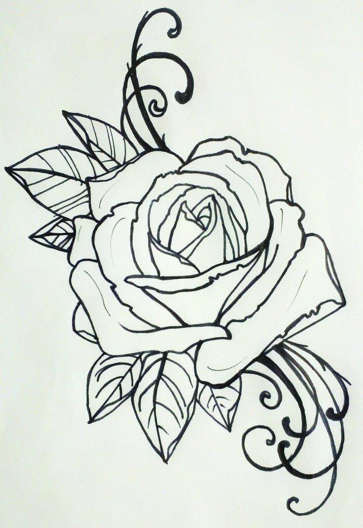 Drawn rose bush three With rose adorning often