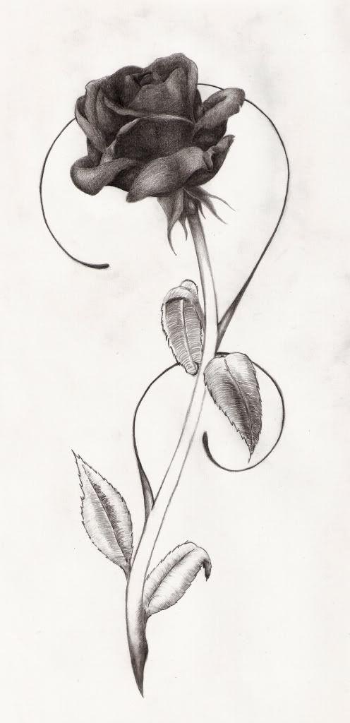 Drawn rose bush tiny rose Rose rose tiny wrist