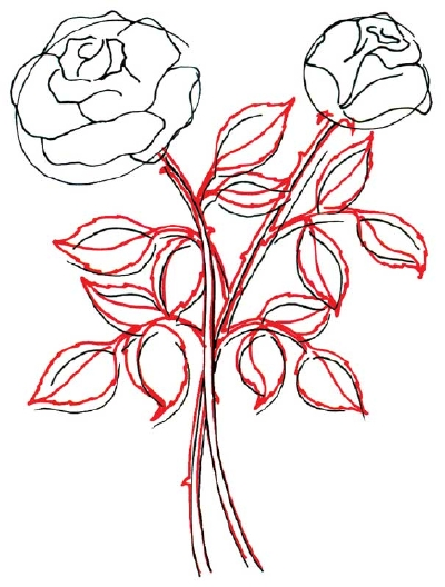 Drawn rose bush tiny rose When outline de with flower's
