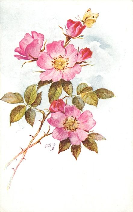 Drawn rose bush wild rose Ideas Vintage on best flower