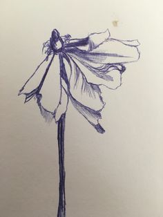Drawn rose bush wilted flower Flower drawing Search Wilting Google