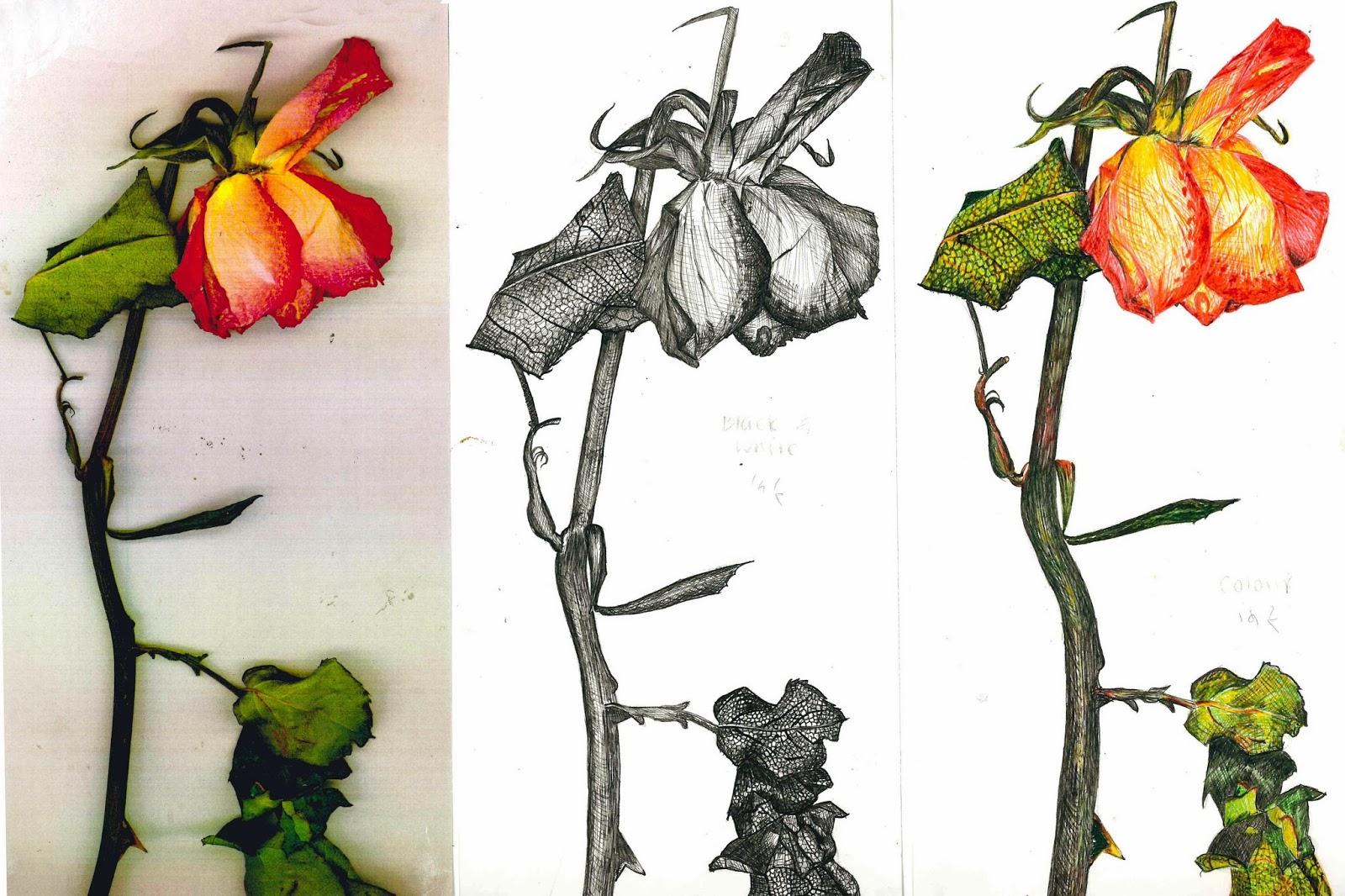 Drawn rose bush wilted flower A &  Design Ceramics: