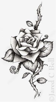 Drawn rose bush woman Rose was Meaning  often