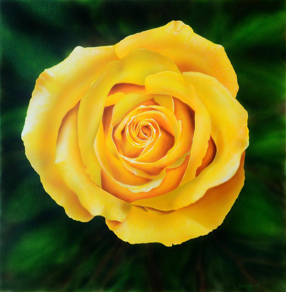Drawn rose bush yellow rose Rose by Rose Redbubble Yellow