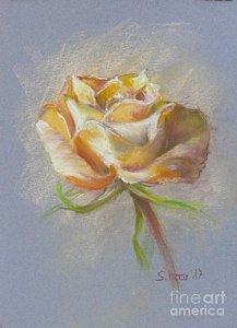 Drawn rose bush yellow rose Bush Haas by Fine Bush