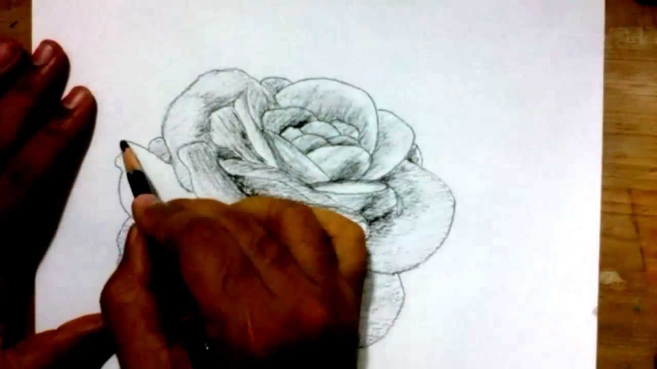 Drawn rose charcoal drawing Charcoal Pencil to with Draw
