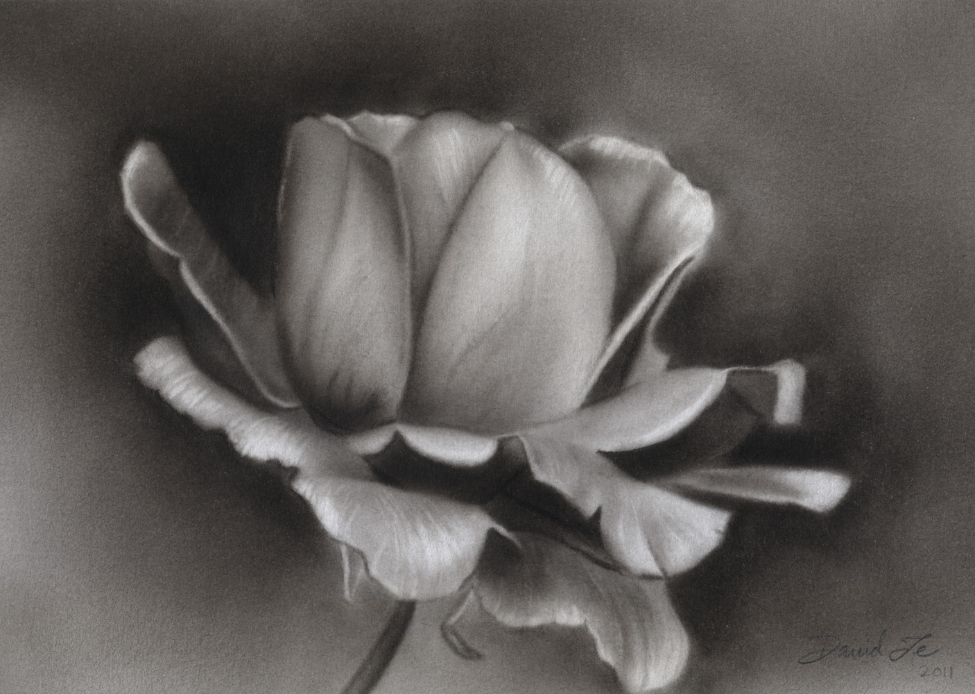 Drawn rose charcoal drawing Blogspot charcoal http sketches sketches