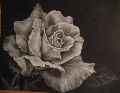 Drawn rose charcoal drawing White Charcoal Rose Draw White