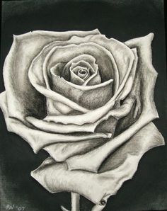 Drawn rose charcoal drawing Inspiration Beautiful Rose  for