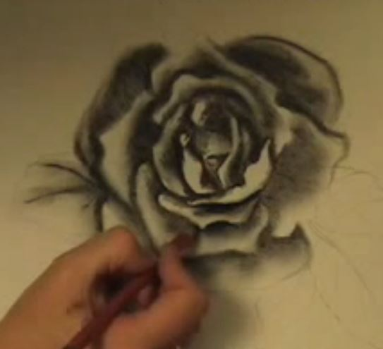 Drawn rose charcoal drawing Draw Flowers draw Artvilla to