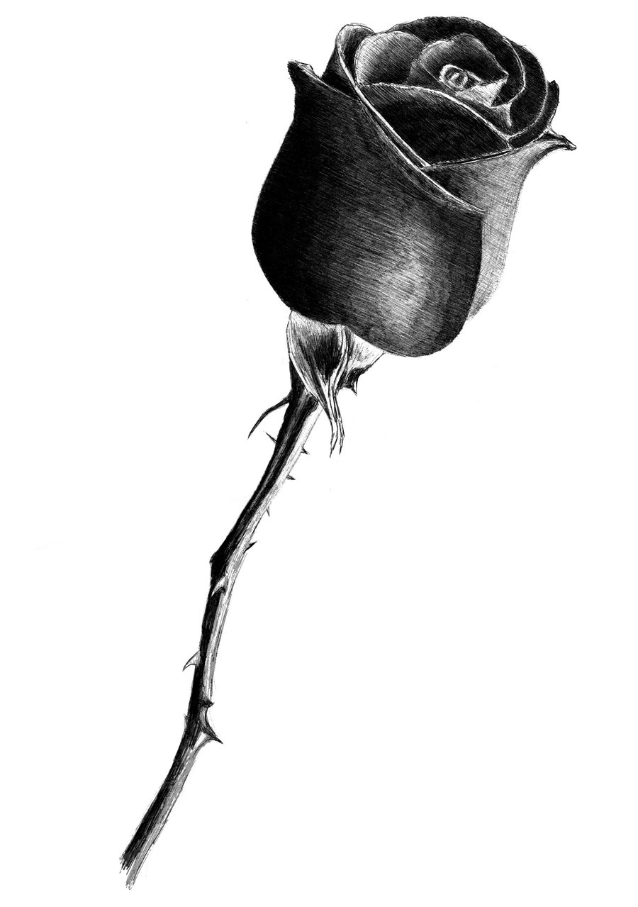 Drawn rose closed  on deviantART by deviantART