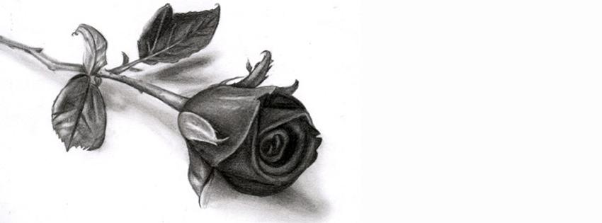 Drawn rose closed Muhabbat Chat Pakidil