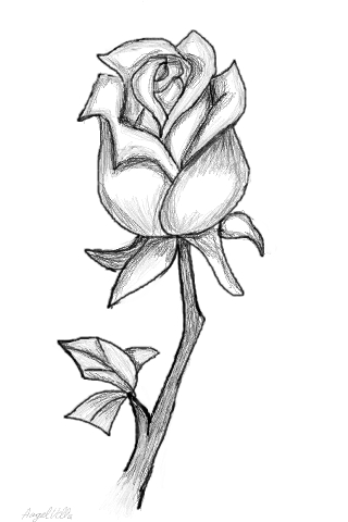 Drawn rose closed Collection Drawn tattoos A Rose