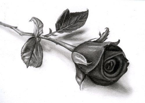 Drawn rose closed Pinterest Pinterest Sketches drawings PENCIL