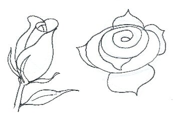 Drawn rose closed How Stage to How 3