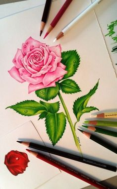 Drawn rose color A realistic the Drawings Pinterest